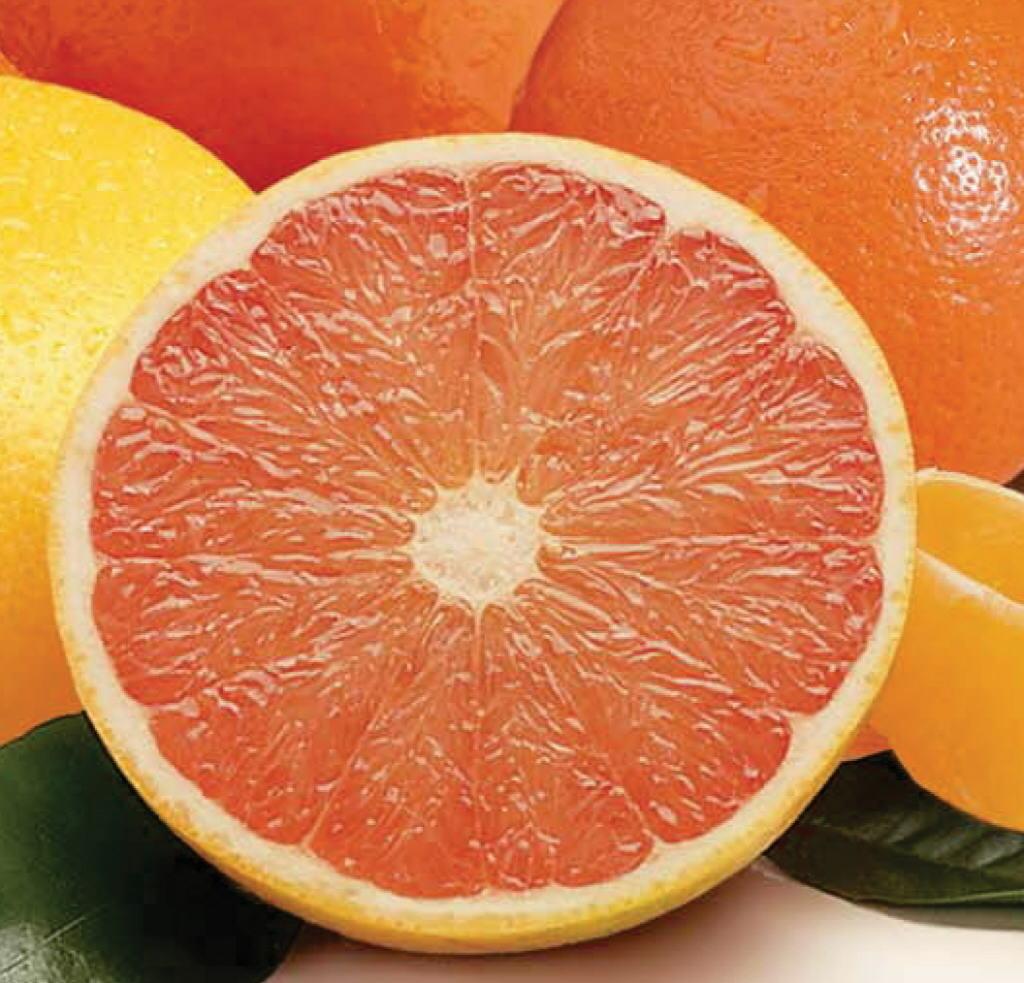 grapefruit24.jpg