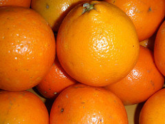 Cushman Honeybell Oranges