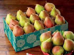 Lil Princess Pears - Baby Comice, Perfect for snacking