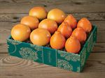 honeybellsgrapefruit-buy-honeybells-online-073119b_01.jpg